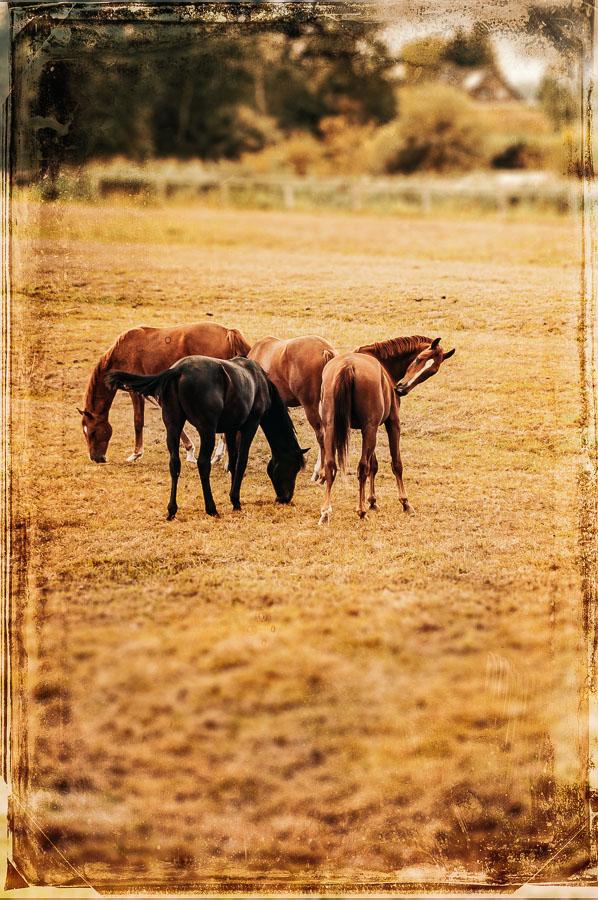 Pferde in Allermöhe