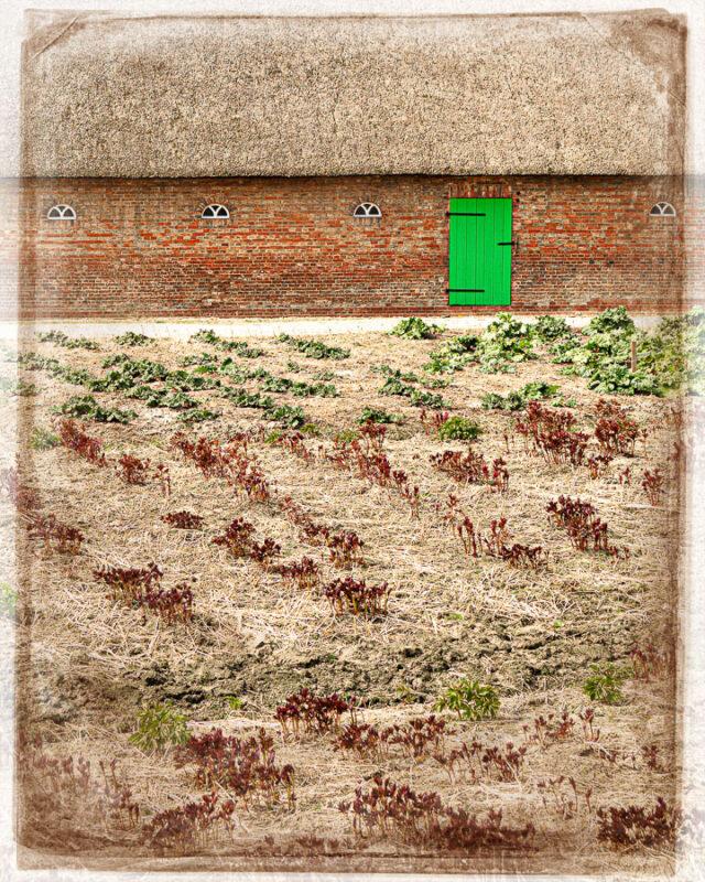 Strohdachhaus mit Gemüsebeet in Neuengamme
